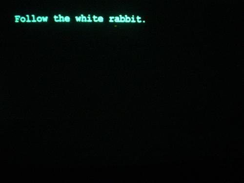matrix rabbit